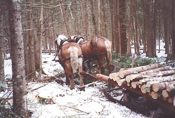woodsled