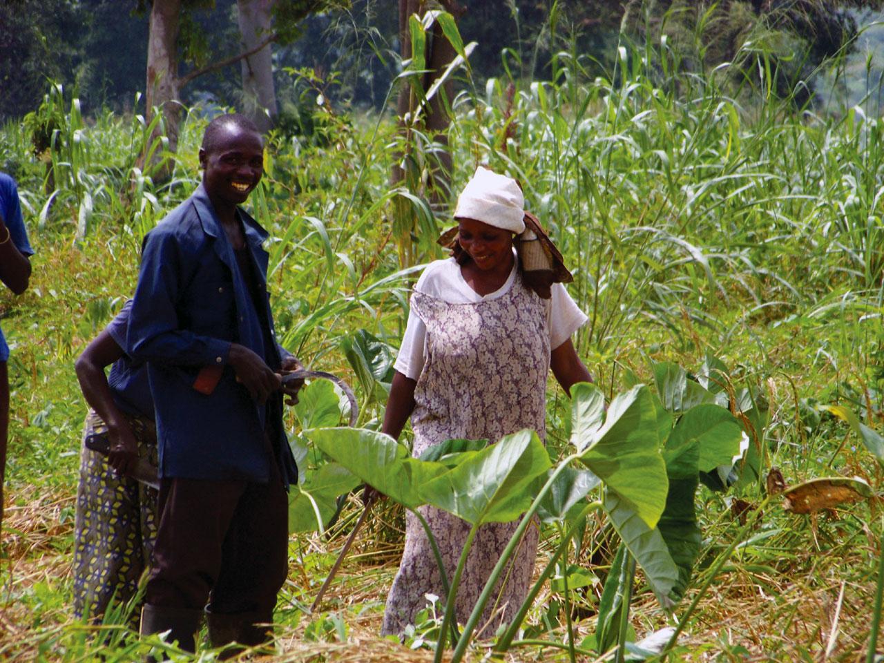 Congo Farm Project