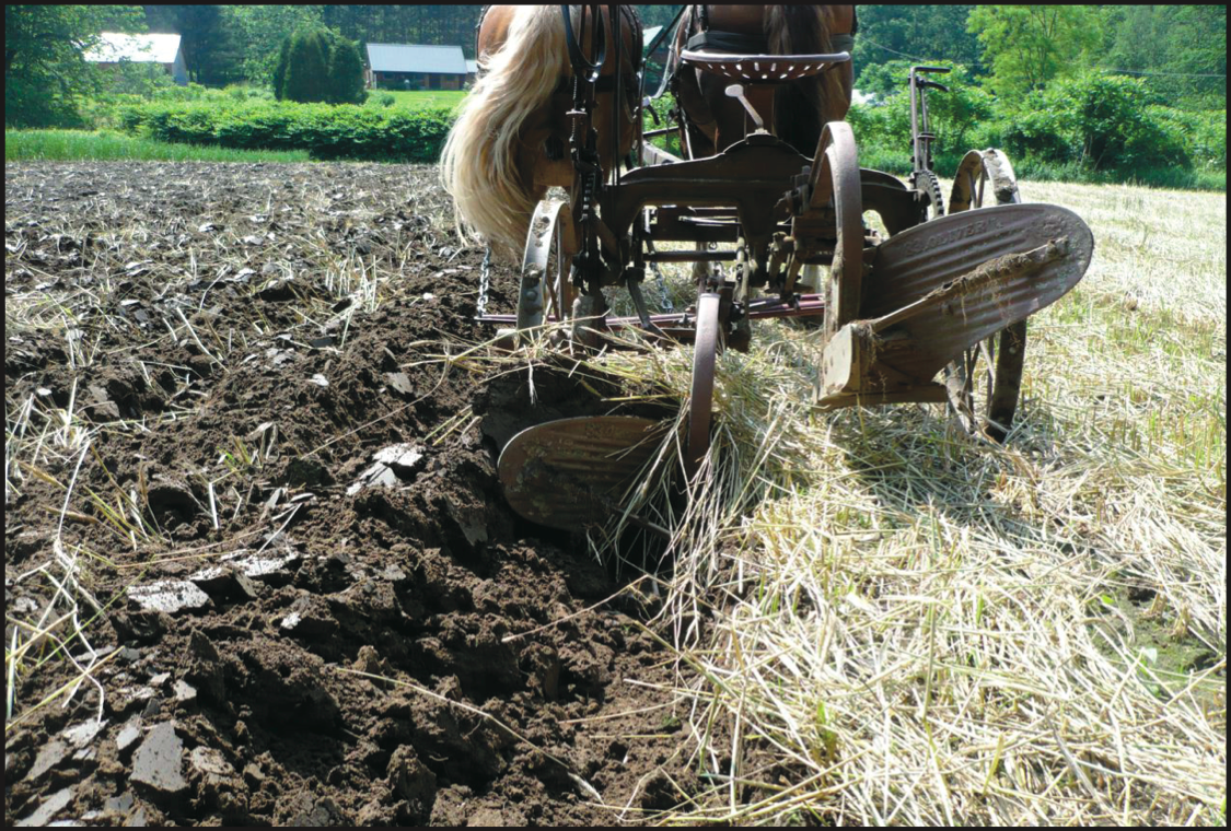 Two-Way Plow Plowing Under Green Manure