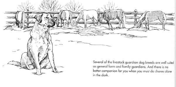 Livestock Guardians