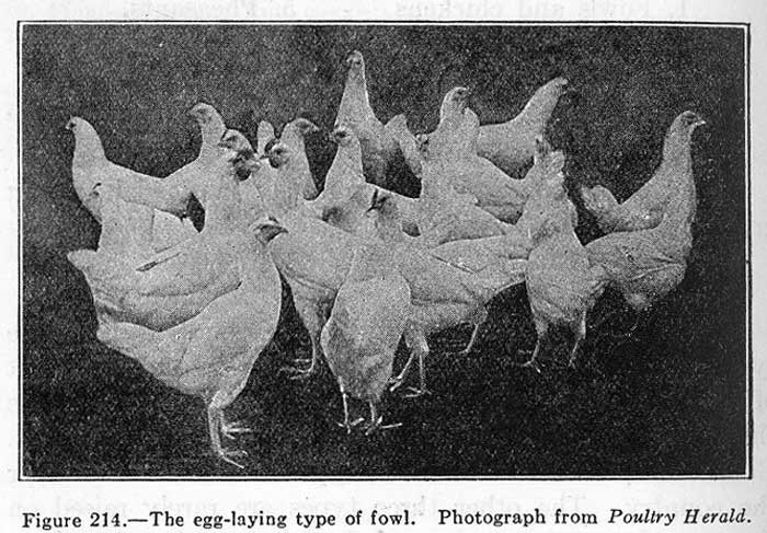 a-study-of-farm-animals