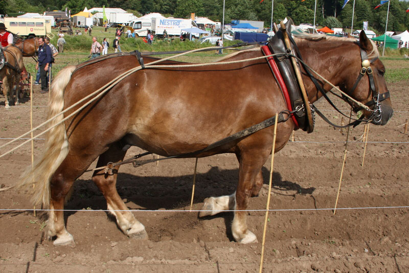 pferdestarke.04