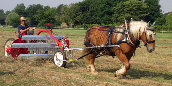 New Horse-drawn Side Delivery Rakes from Europe