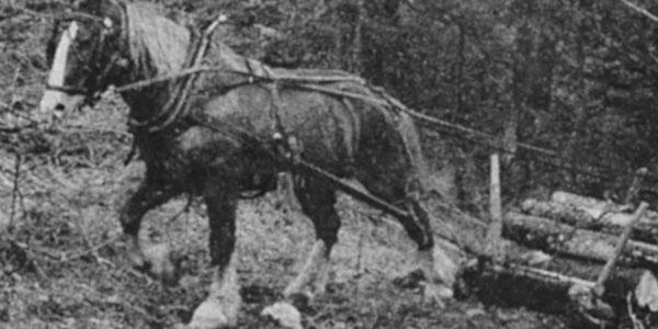 A Greenhorn Tries Draft Horses