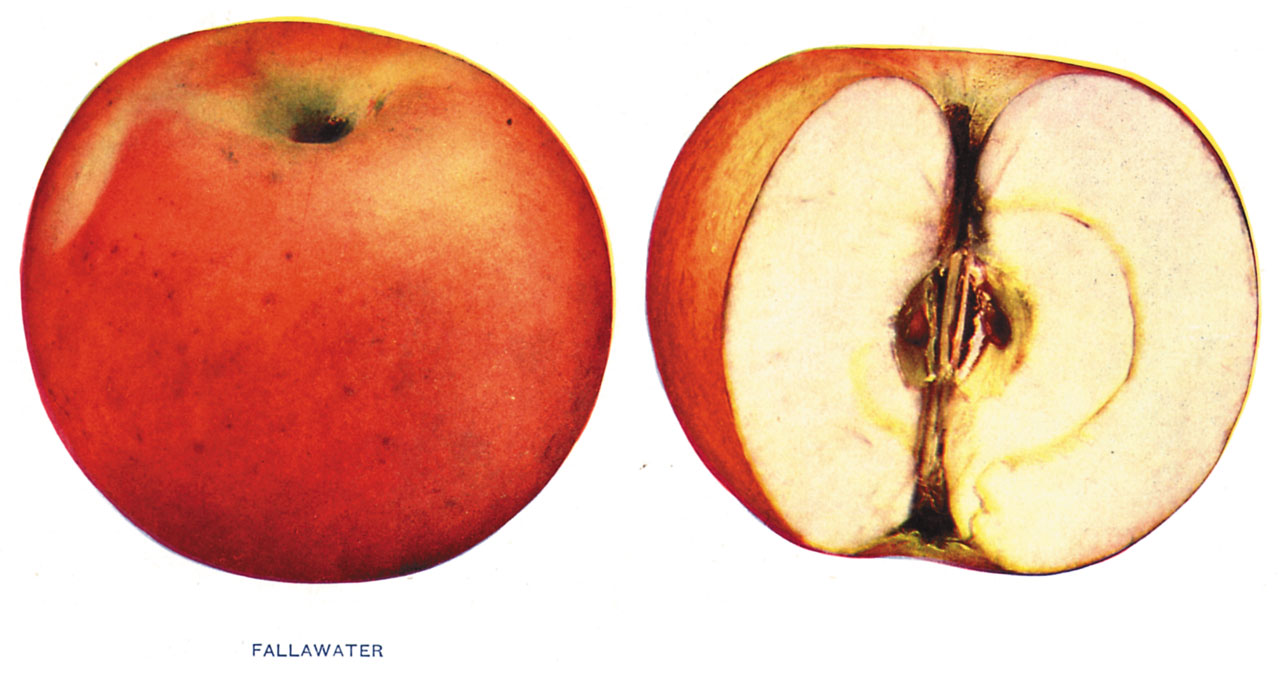 Lost Apples - Fallawater