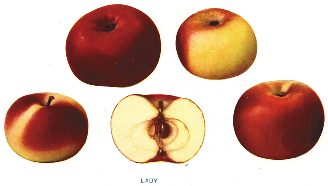 Lost Apples - Lady