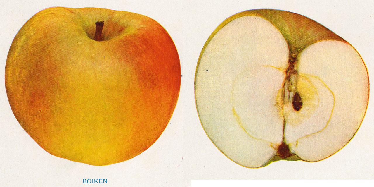 Lost Apples - Boiken