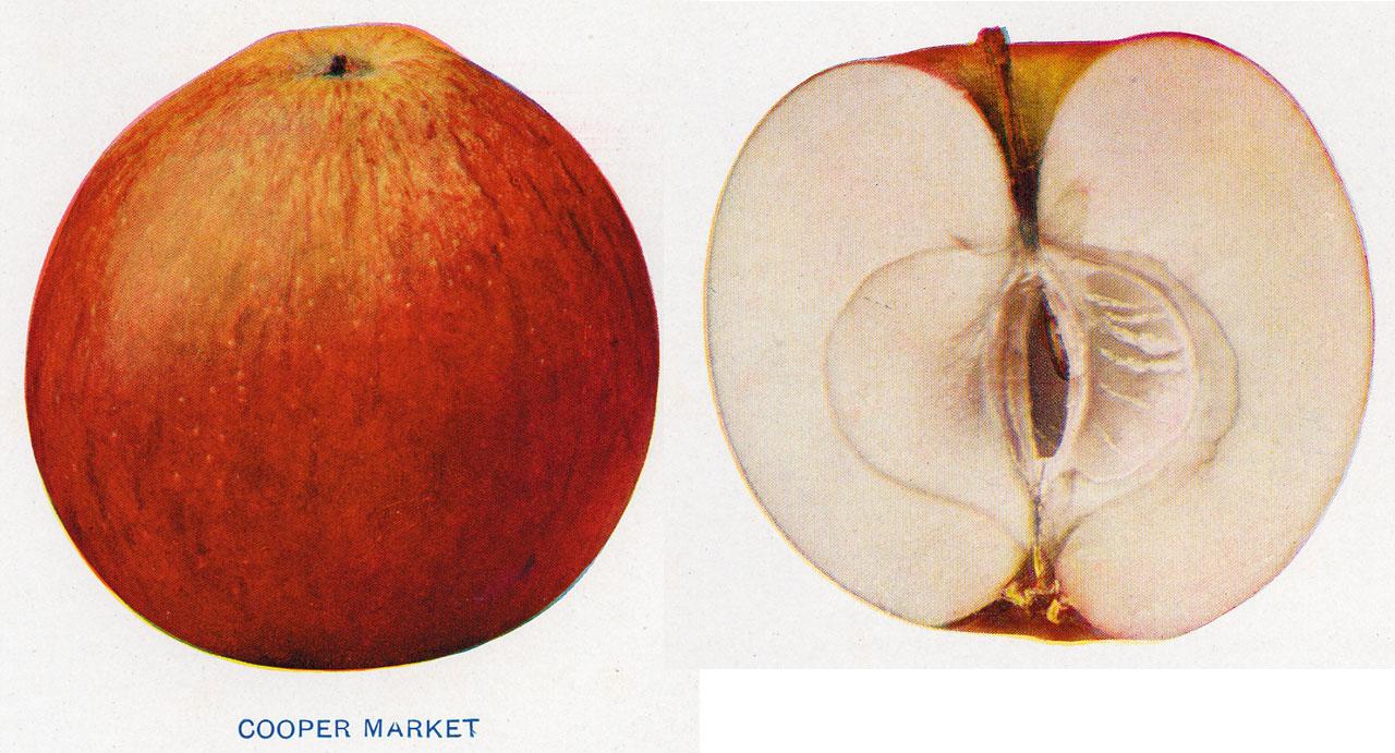 Lost Apples - Cooper Market