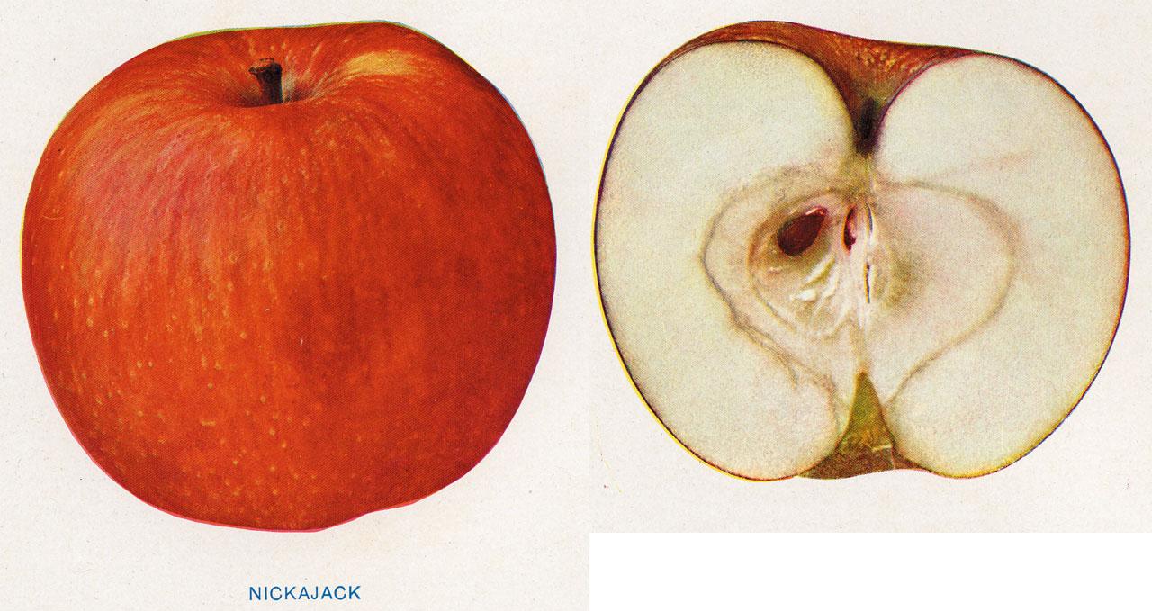Lost Apples - Nickajack