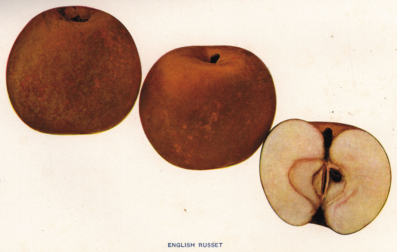 Lost Apples - English Russet