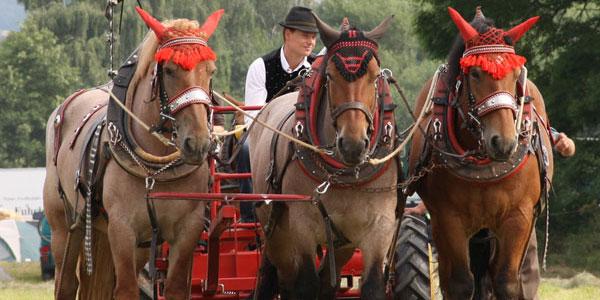 Pferdestarke