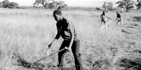 Mowing with Scythes