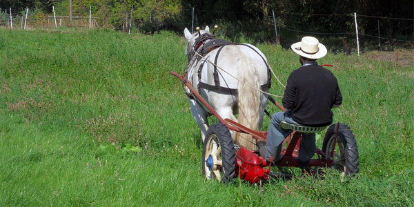 Hay Making with a Single Horse Part 2