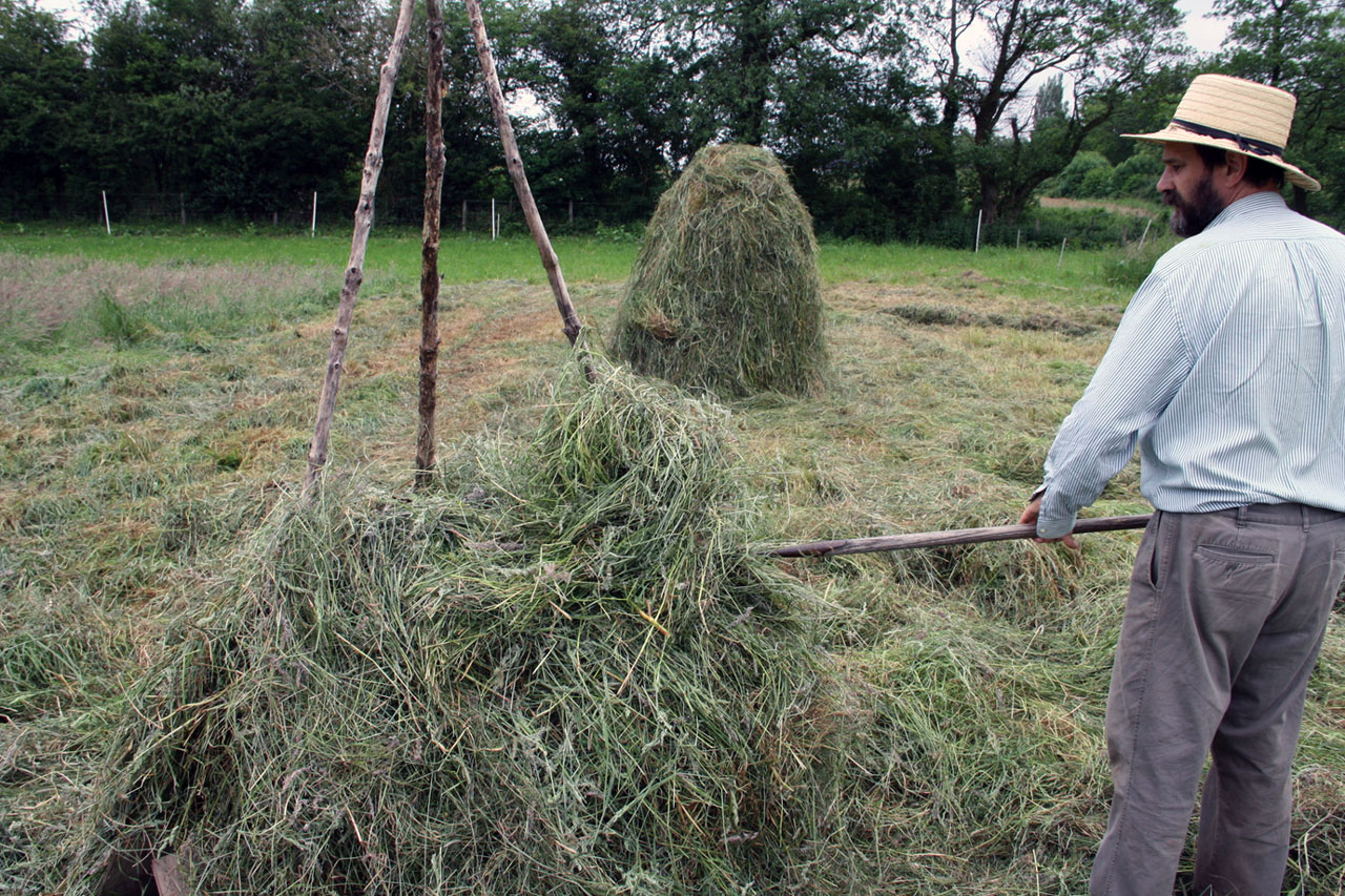 Hay Making with a Single Horse Part 3