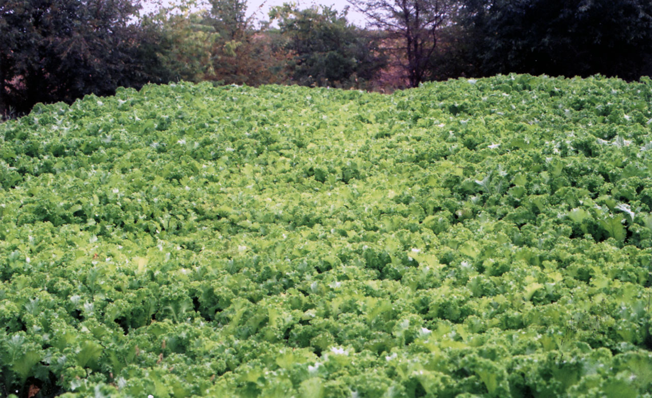 Marketable Cover Crops