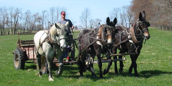 A Tour of Various Draft Farms