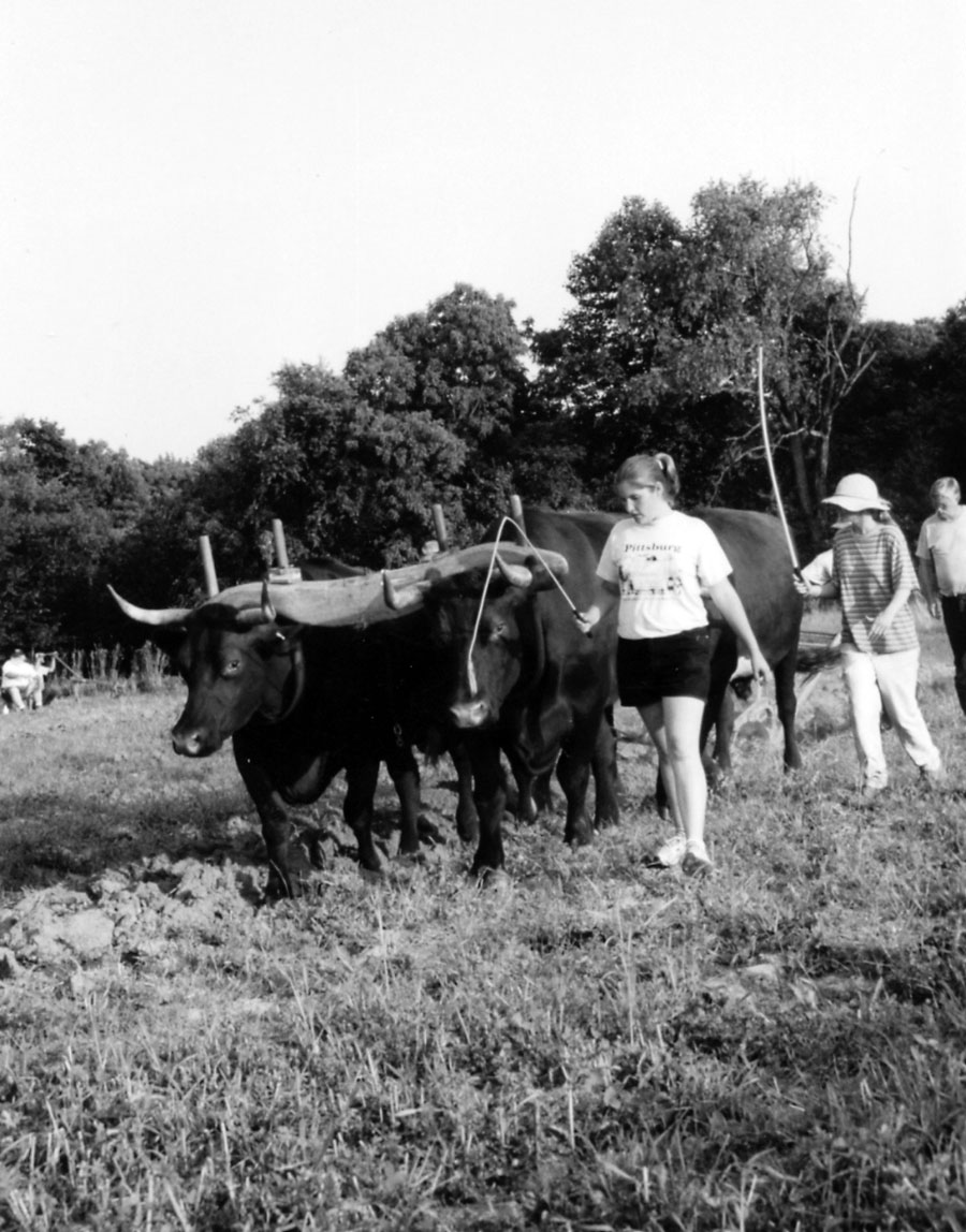 Working Steers and Oxen on the Small Farm