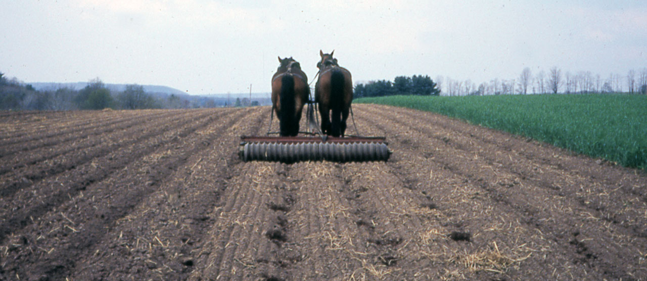 Cultivating Questions A Horsedrawn Guidance System