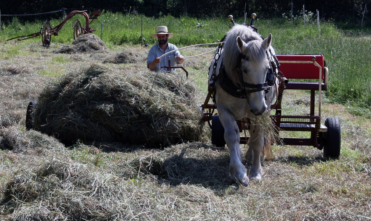 Hay Making with a Single Horse Part 4