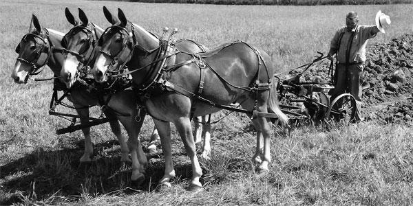 The Mule Part 1