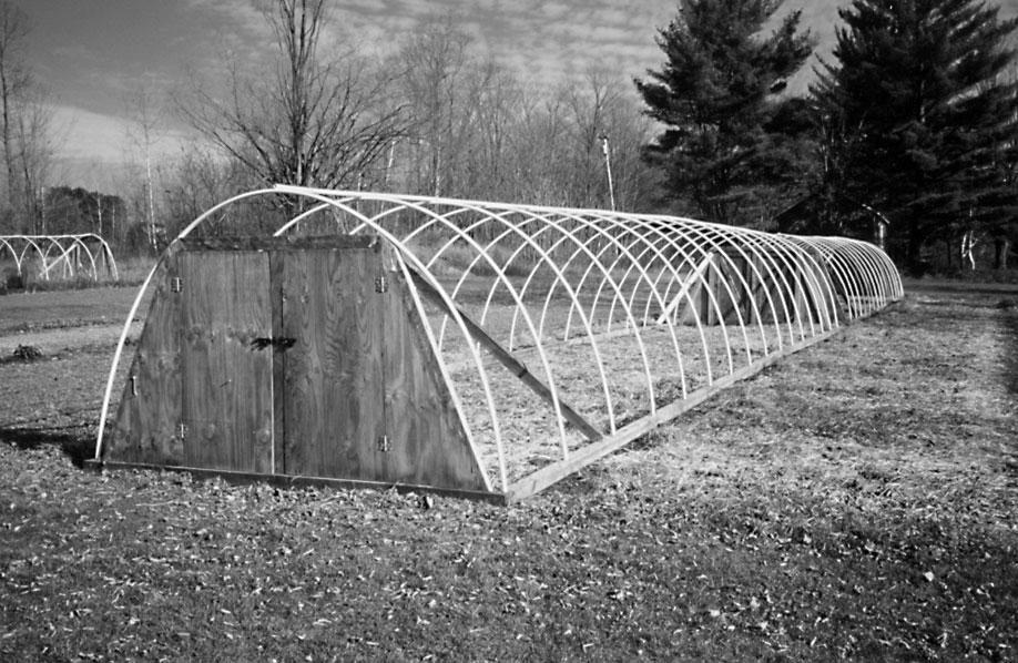 Purslane, Portahoopies and Plow Planted Peas