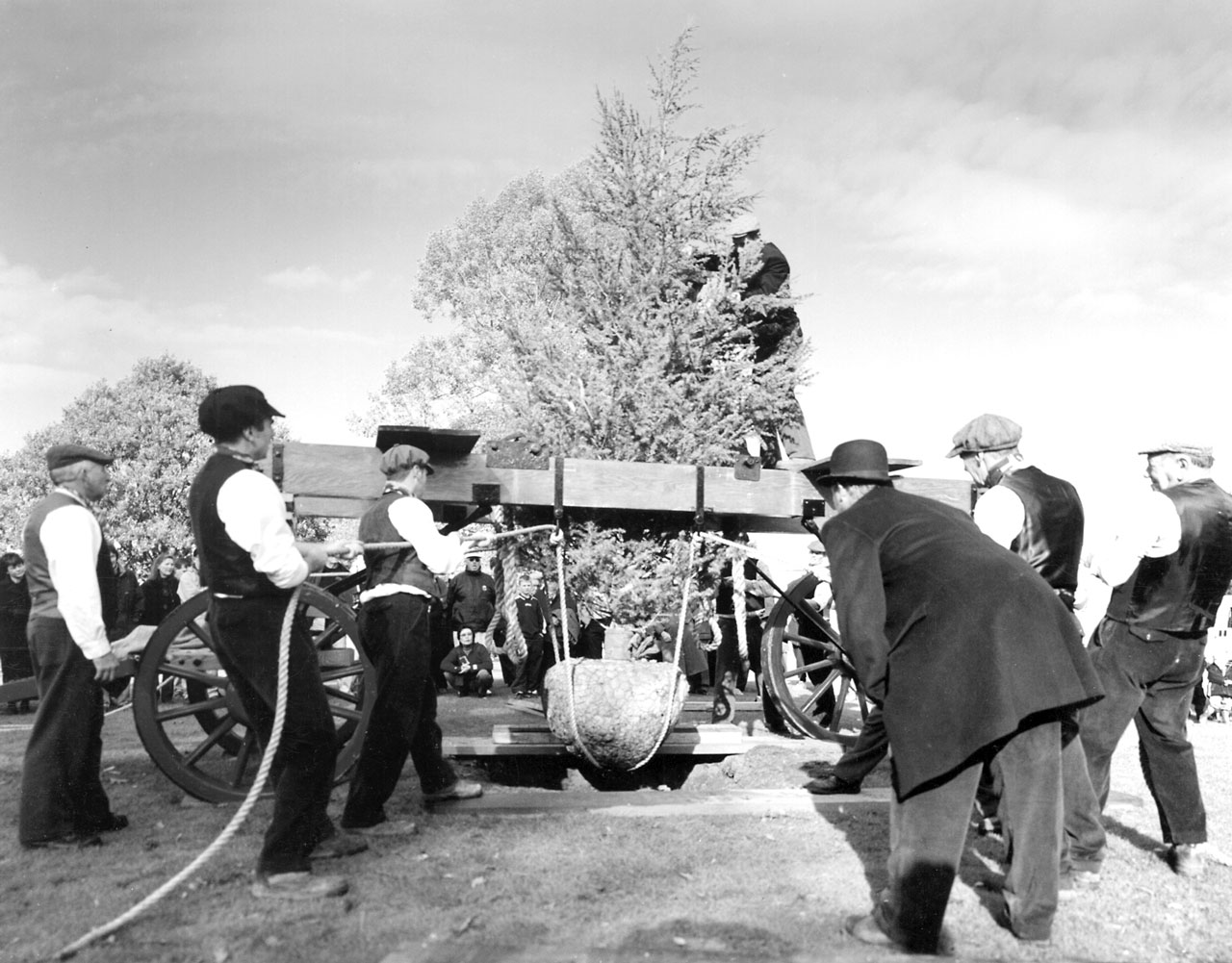 A Step Back in Time with the Barron Tree Planter