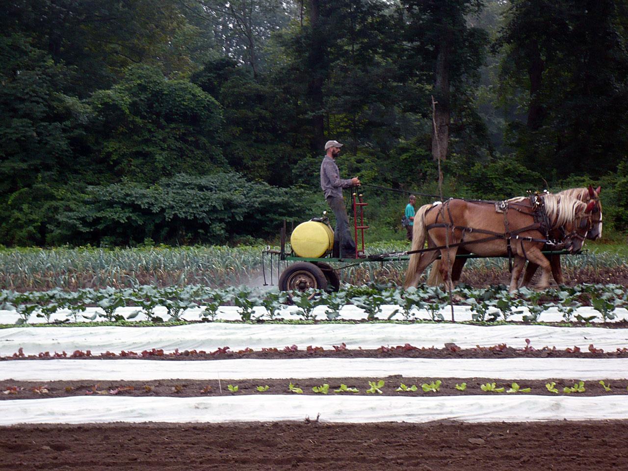Fjordworks: Horse Powered Potatoes