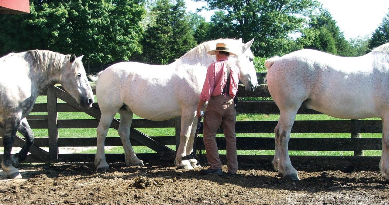 Interpreting Your Horse's Body Language