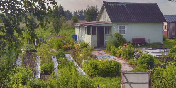 Russian Dacha Gardening