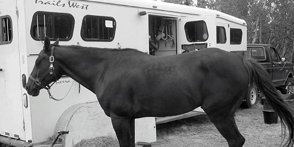 Ask A Teamster Hauling Horses