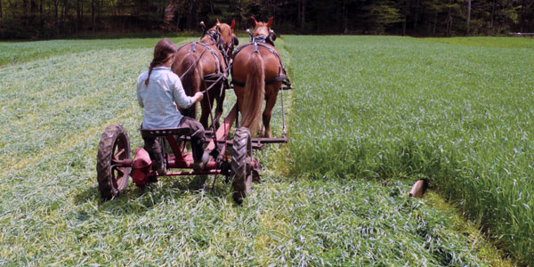 Cultivating Questions The Cost of Working Horses
