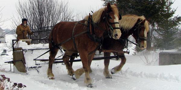 Horse Powered Snow Scoop
