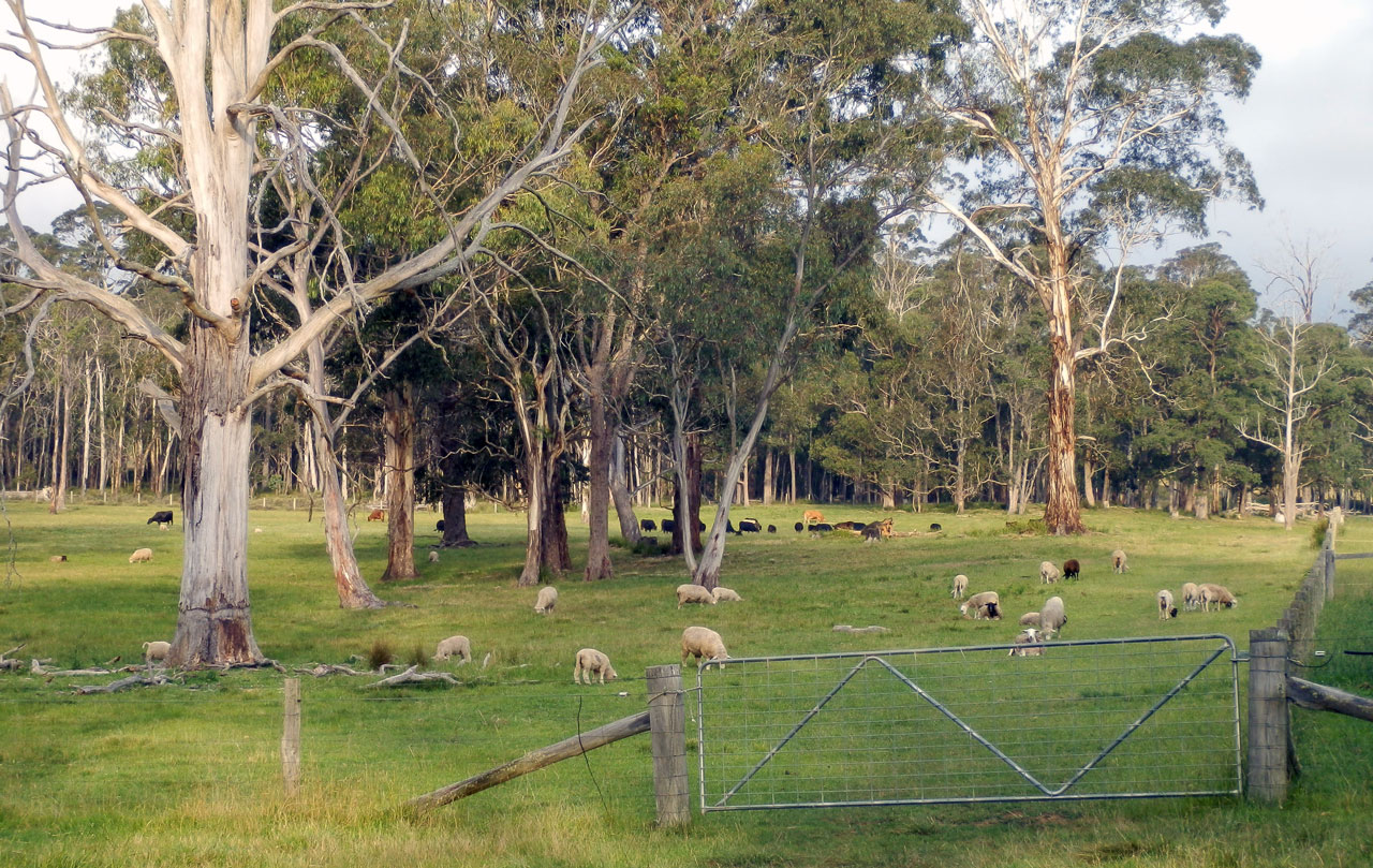 Mayfield Farm, New South Wales, Australia