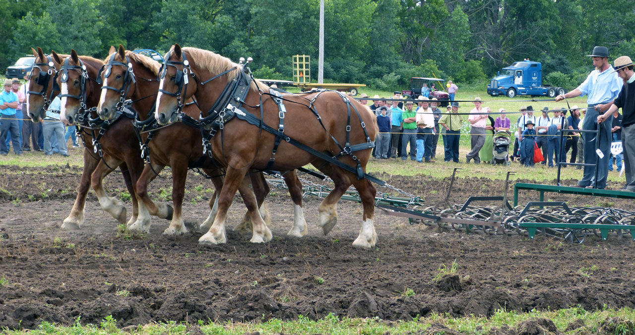 Step Ahead Horse Progress Days 2016