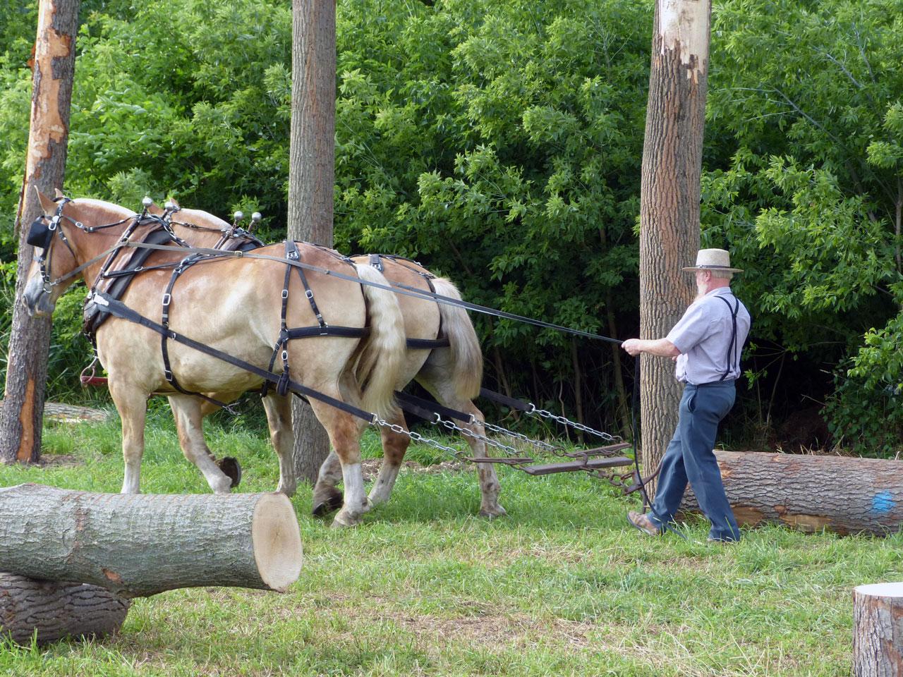 Step Ahead Horse Progress Days 2016