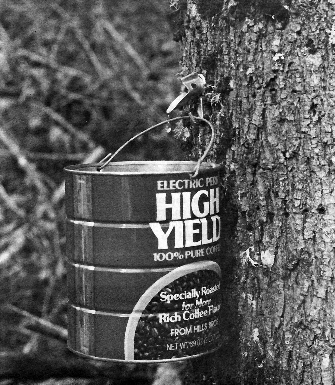 Syrup From Oregons Big-Leaf Maple
