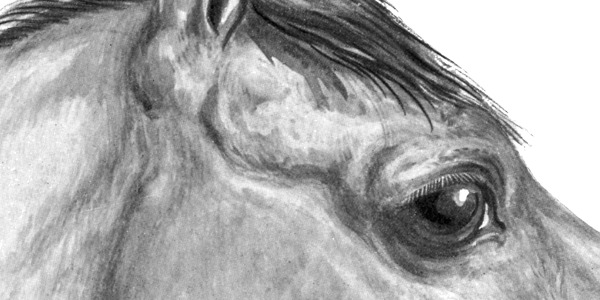 The Equine Eye
