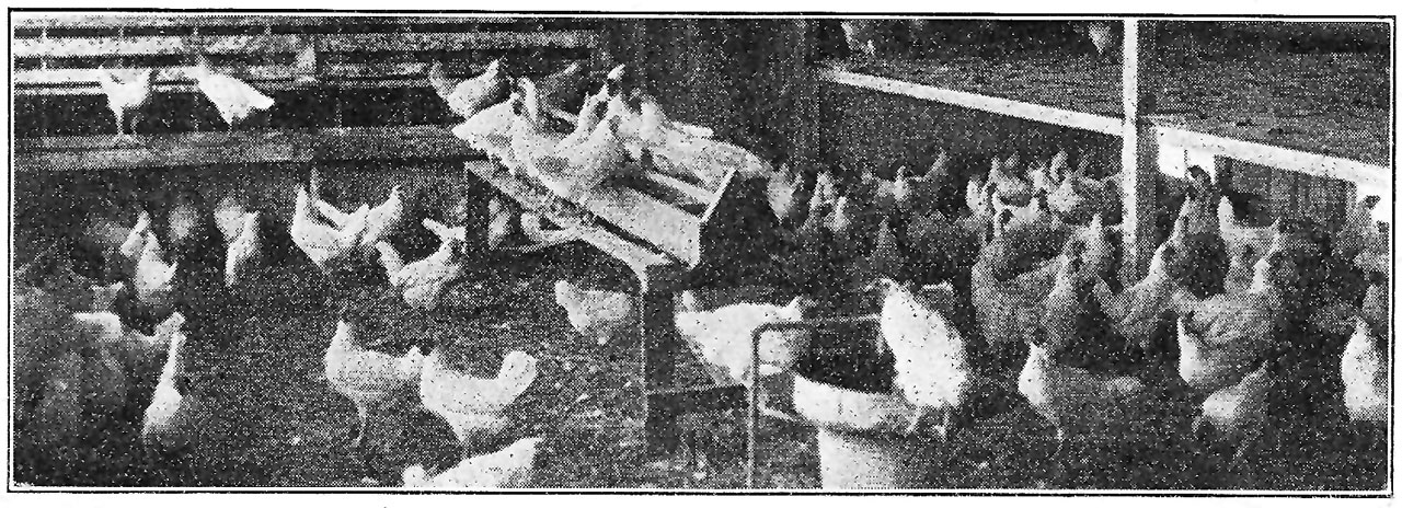 400 Hen Laying House