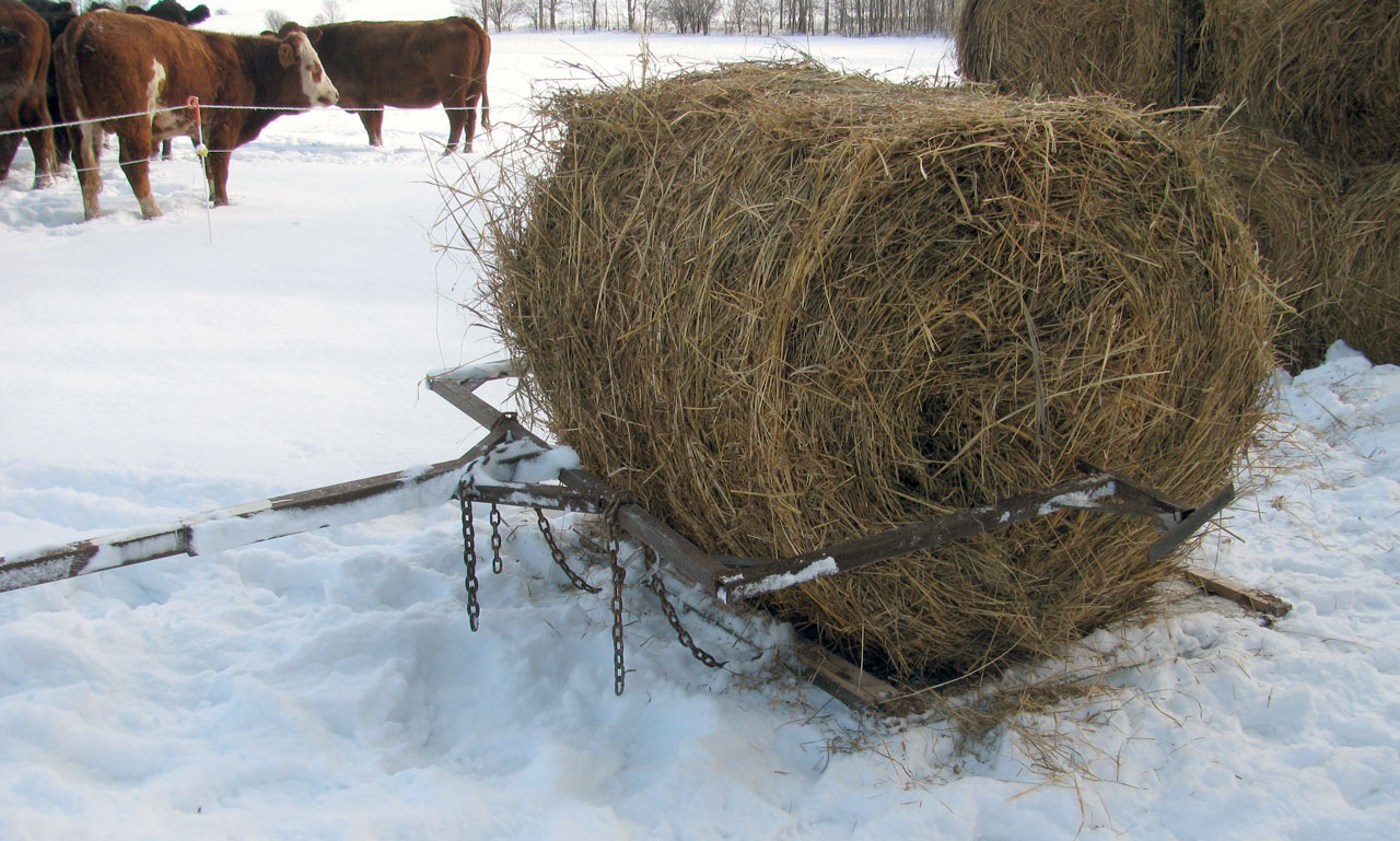 A Horse Powered Round Bale Unroller