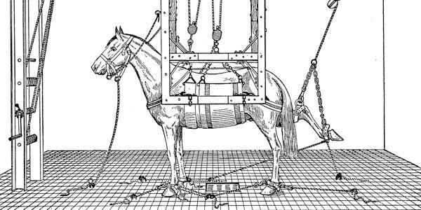 Horseshoeing Part 3A