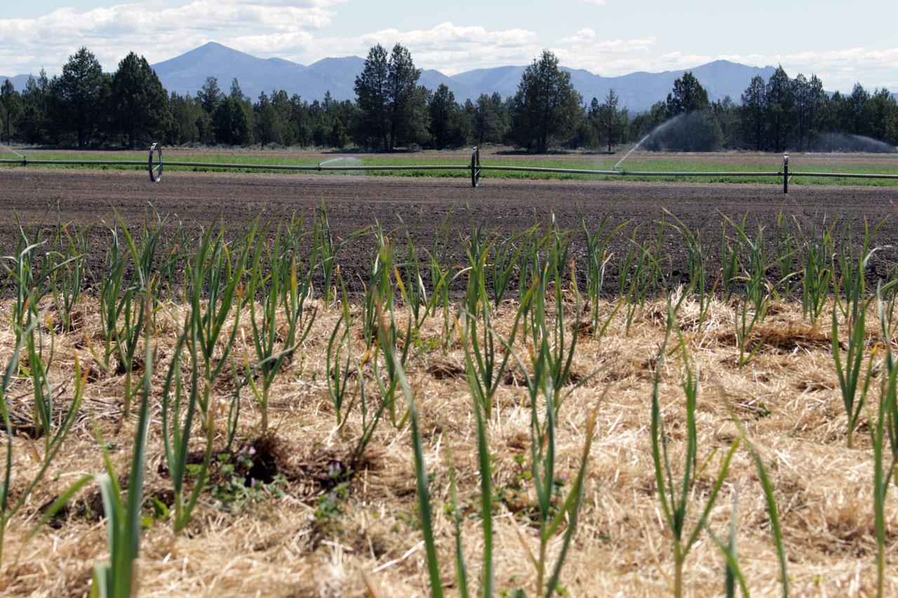 Rainshadow Organics