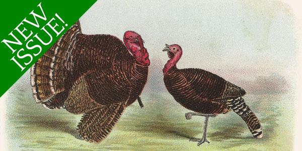 Methods of Feeding Turkeys