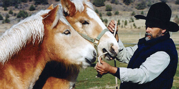Haltering Foals - Training Workhorses Training Teamsters