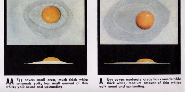 Eggs & Their Care