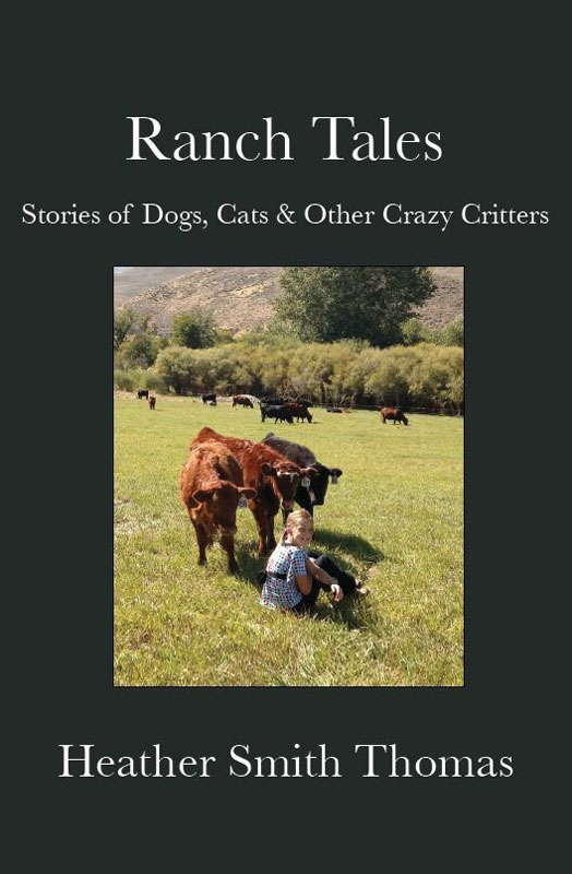 Stories of Ranch Life