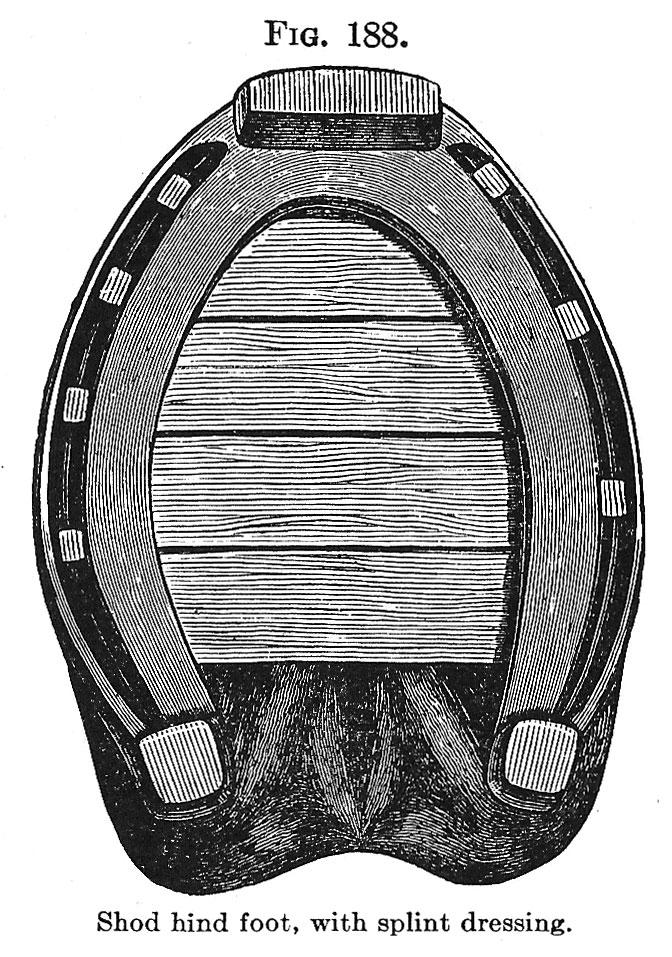 Horseshoeing Part 6B
