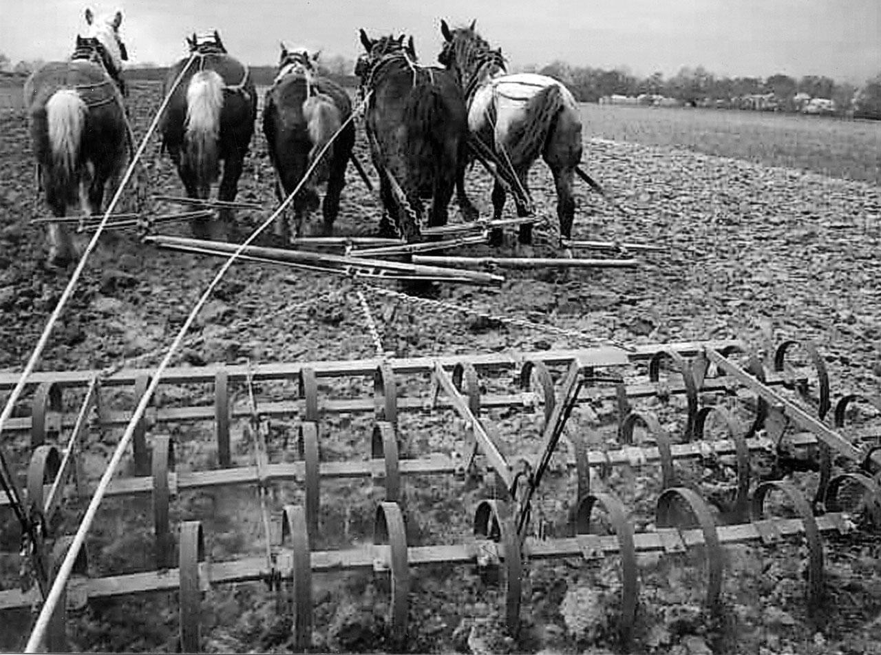 French Horsefarmer