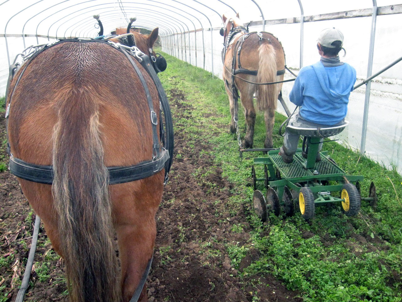 Fjordworks Market Gardening with a Single Horse