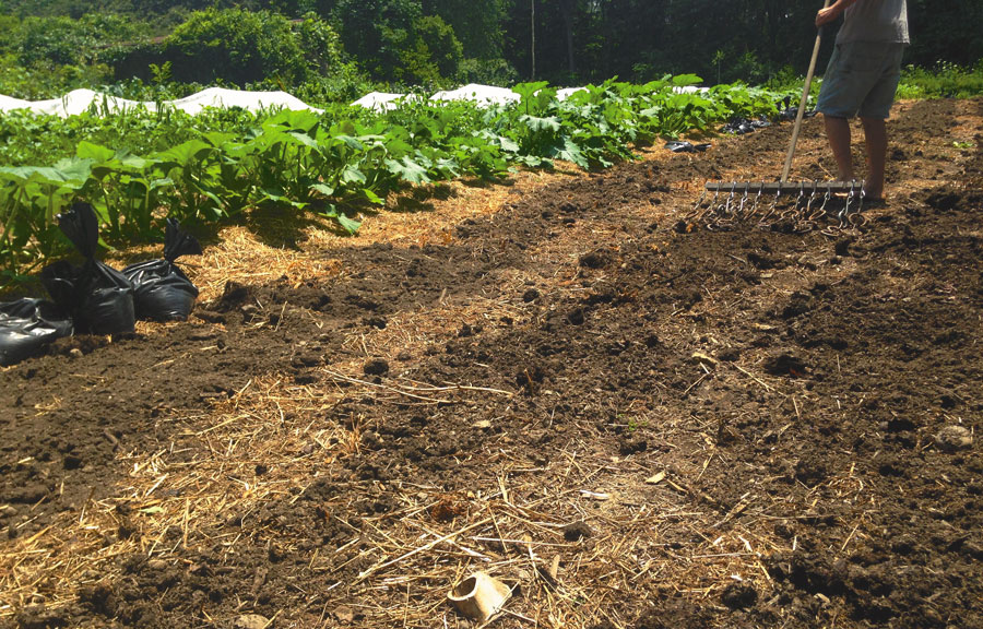 No-Till Vegetable System at Tobacco Road Farm