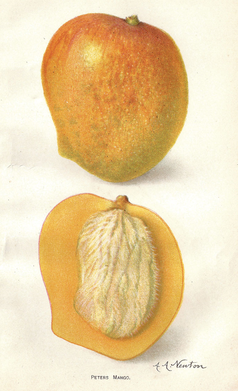 Promising New Fruits